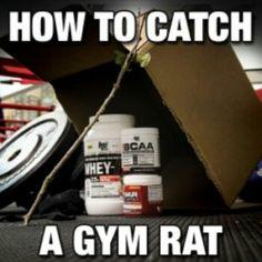 Fitness memes: how to catch a gym rat
