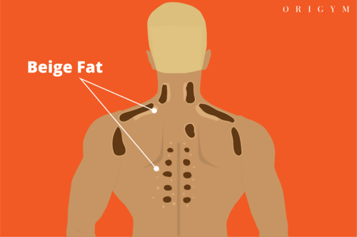 types of body fat: beige fat