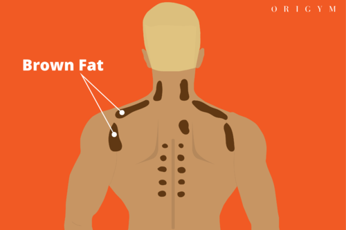 types of body fat: brown fat