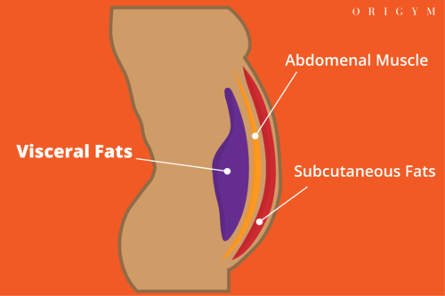 types of body fat: layers of body fat