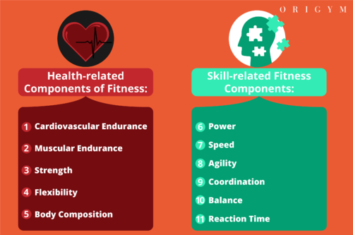11 Components of Fitness: Health & Skill-Related (2019 Guide)