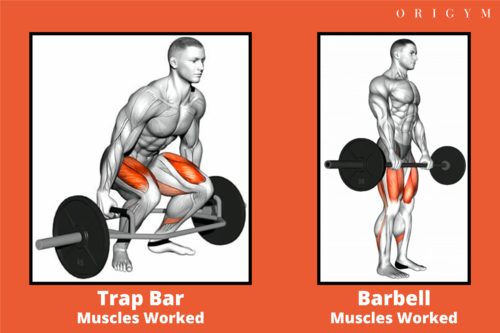 trap bar vs barbell deadlift muscles worked image 6