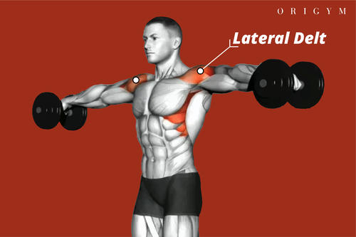 lateral raise muscles worked