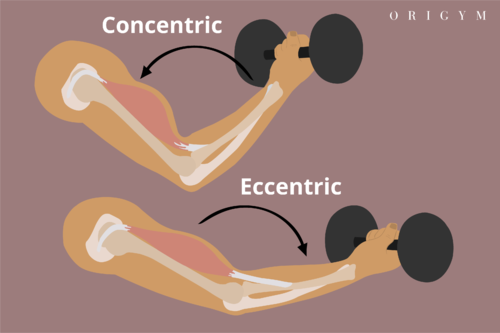 jumping jacks concentric and eccentric muscle contraction image