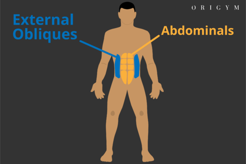 landmine press muscles worked abs diagram