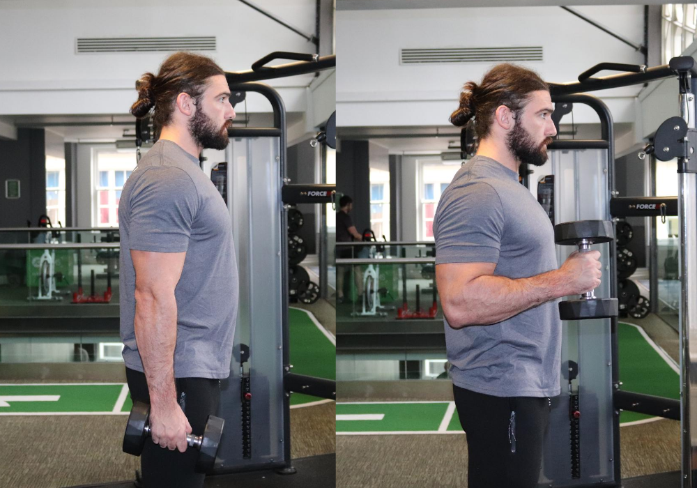 What is a hammer curl exercise